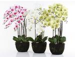 https://sklep.hydroponika.pl/Ro%C5%9Bliny_i_kwiaty_sztuczne/storczyki/5355-Phalenopsis_w_b%C5%82ocie_92_cm_bia%C5%82o-kremowa.html - zdjęcie 4