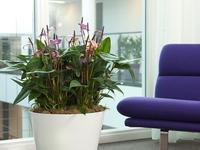 Donice do salonu i biura. Kwiaty doniczkowe w nowoczesnym wnętrzu